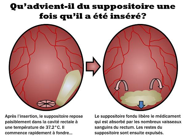 Le suppositoire fond et libère le médicament qui est absorbé par les nombreux vaisseaux sanguins du rectum